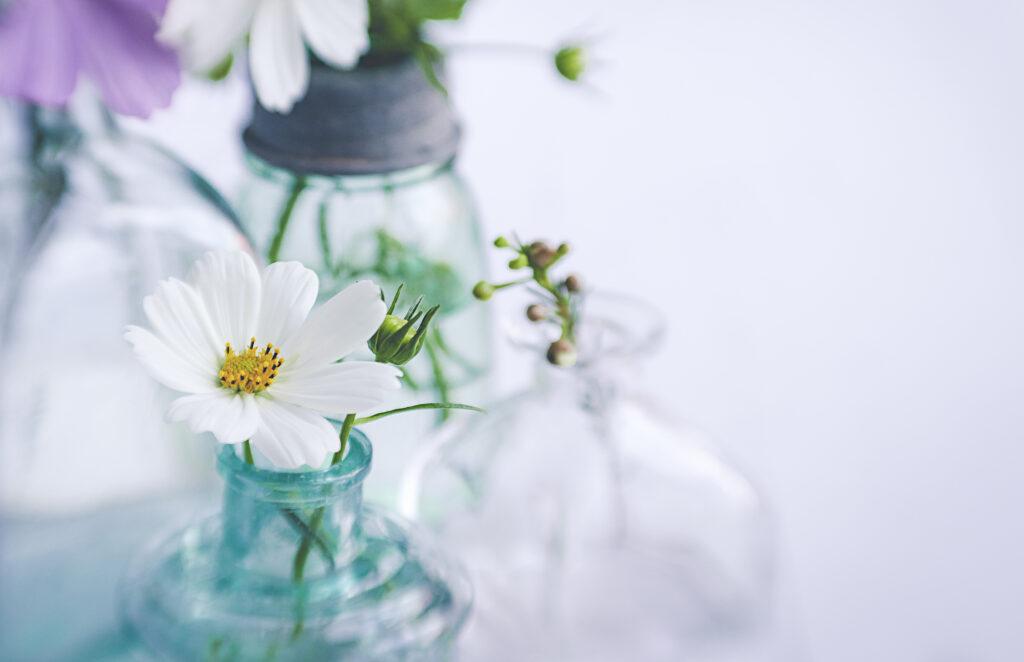 whiteーflower